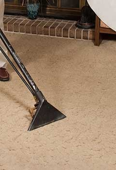 Fast Carpet Stain Removal Madison Heights
